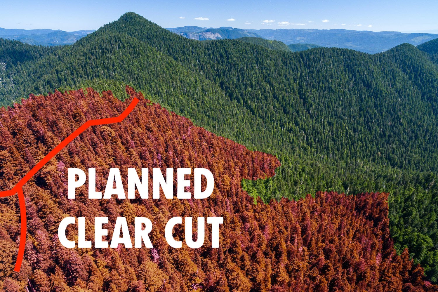 Planned Old Growth Logging